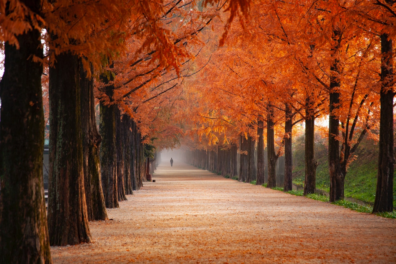 scenic image of autumn trees, figure in the distance on central path, unwind this autumn